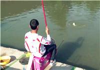 《黑坑江湖》第六季25集 北京顺义继续掐鱼之旅