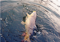 自然水域作钓防脱钩跑鱼技巧