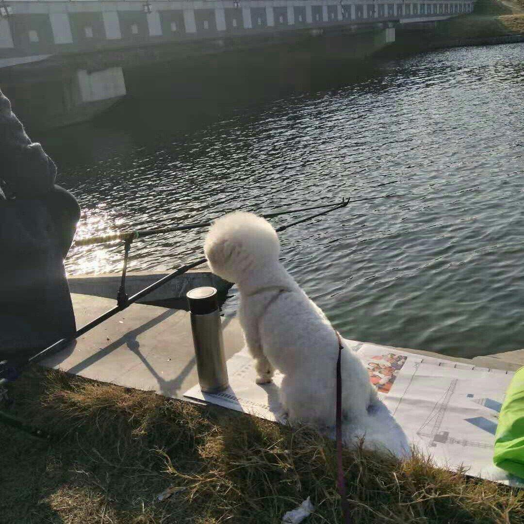 不知咋钓鱼啊