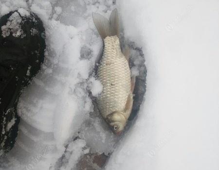 雨天雪地出钓   证明我对钓鱼的真爱 红虫饵料钓鲤鱼