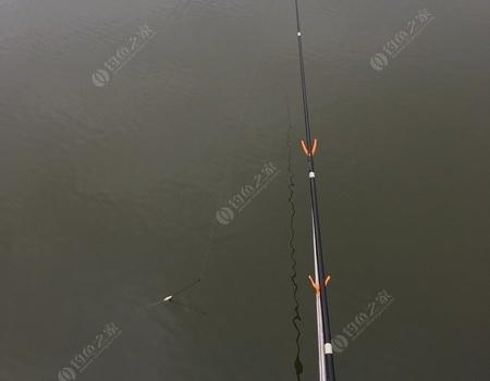 雨天️坑尾解毒!!! 钓鱼之家饵料钓鲤鱼