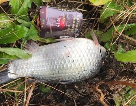 風里來雨里去也是夠了 紅蟲餌料釣鯽魚