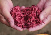 冬季紅蟲餌使用說明