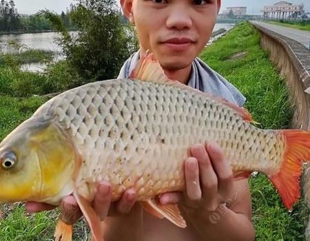 寻野物,再钓西江闸口 龙王恨饵料钓鲤鱼