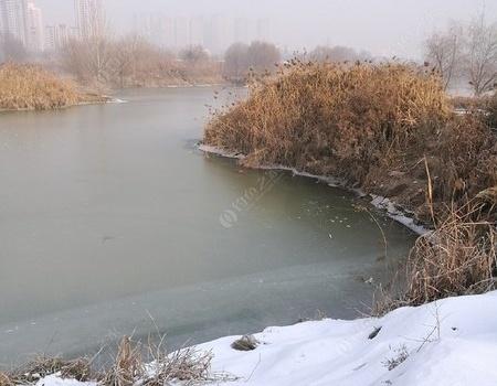 东转西跑,还是坐在了渭河边。 龙王恨饵料钓鲤鱼