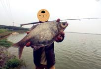 庫釣鳊魚釣具搭配與作釣技巧