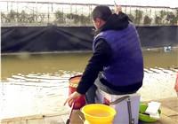 《陪着地瓜去钓鱼》20171210 天津塘沽滨海一号大棚(三)