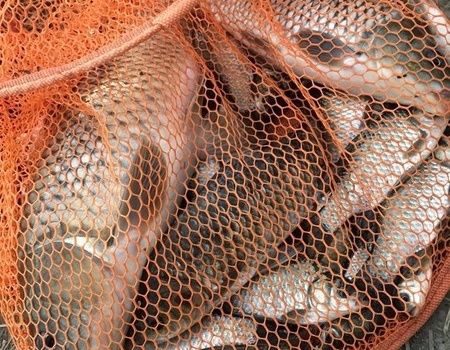 為魚我受冷風吹。半夜出去打窩。為了釣魚我也是拼了 紅蟲餌料釣鯽魚