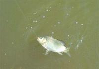 黑坑养殖塘钓鱼遇停口如何解决