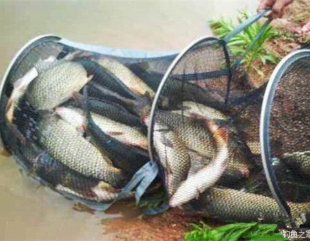 水塘爆护 钓获青草罗非鳊鲮鱼!