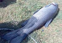 关于水库钓大鱼的四个建议