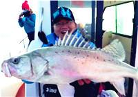 《蓝旗鱼小汐路亚视频》 深海作钓大海鲈