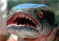 沼洼钓黑鱼最佳垂钓时间与诱钓技巧分享