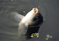 关于冬天钓鱼的六个干货技巧
