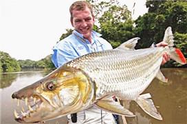 那些被钓到的长牙的鱼 高清图片