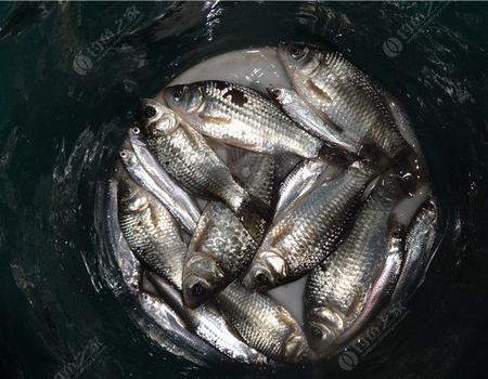 [原创]钓雨后鱼口不多