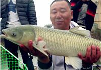 《钩尖江湖》钓鱼的故事06 这是到现在为止唯一的一条鱼