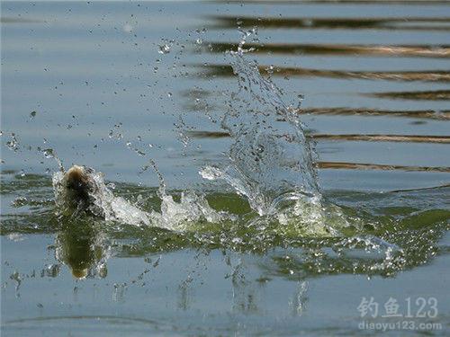 釣鰱鳙餌料配方