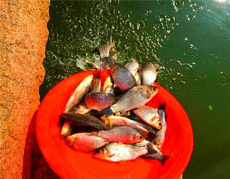 风前雨后好钓鱼。没想到真的是爆护天 天元饵料钓鲫鱼