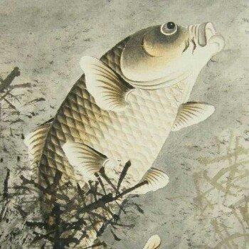 鲤鱼小哥7