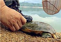 《我的7日江湖》第11期 老鬼队挂白条诱鱼意外中获甲鱼(上)