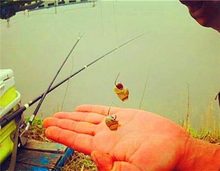 微风细雨时在有鲢鳙的江中垂钓大青、草鱼技巧