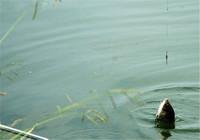 老釣魚人的春季釣小體型魚技巧