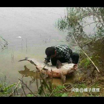 明哥念钓鱼