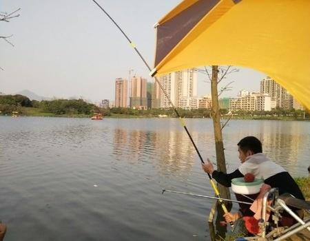 飞来湖下午3小时钓获1条3斤鲮鱼,第5钓
