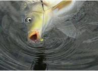 冬钓鲤鱼的饵料配方