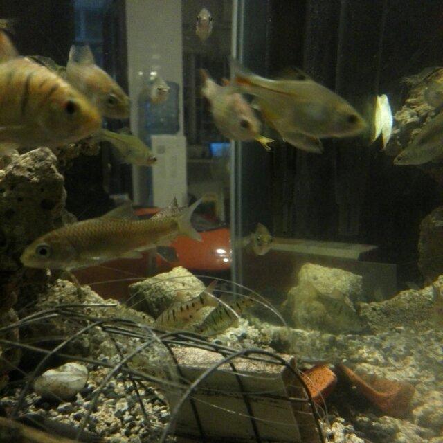 有夢想的咸鱼