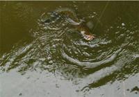不说钓黑鱼饵料只讲钓黑鱼的4种技巧