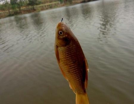 不打重窝,不用小药,不用活饵,照样能钓鱼