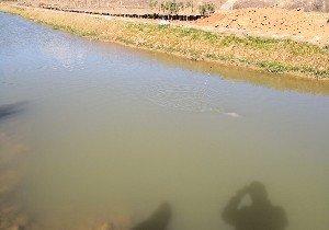 聚隆养殖鱼塘