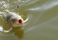 三十年钓鱼经验老钓友带我去钓鱼,学到好多,赚到了!