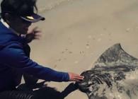 《飞澳两万里》第一季 第39集 魔鬼鱼群来袭