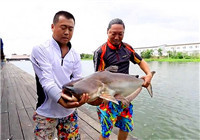 《钓技百事通》第51期 泰国挑战巨型鲶鱼终篇