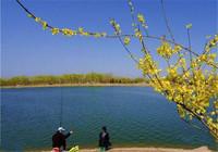 钓鱼人简单分析钓鲤鱼小long8.vip网页版