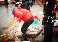 《陪着地瓜去钓鱼》 北京花儿黑坑钓鲫鱼(中)