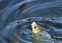 钓鱼脱钩跑鱼的原因有哪些