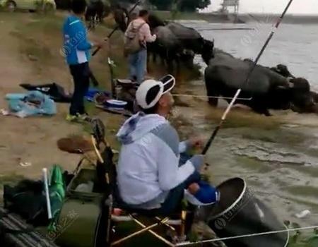 佛山渔乐人第六弹~小分队突袭龙王庙水库 钓鱼之家饵料钓鲮鱼