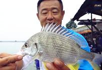 《游钓中国》第二季46集 广东手竿作钓黄脚鱲 小鱼闹窝擒黑鲷