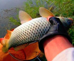 春季钓鲤鱼技巧之窝料 水域与装备!