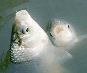 提竿不中鱼 那是你没有学会在这个时候提竿!