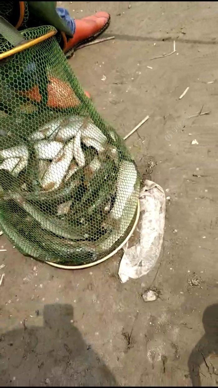 海聊多人视频_今天继续钓淄鱼,晒的不得了 - 钓鱼之家