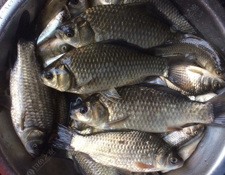 昨天去大石埠水库钓鱼