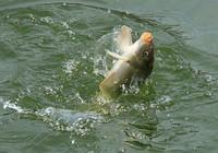 春季钓鱼渔具选择技巧分享