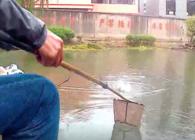 《麦子钓鱼》老司机如何避小鱼 搓饵完胜拉饵钓板鲫