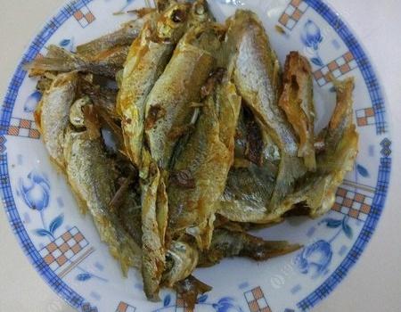 东江的大土鲮在哪里? 龙王恨饵料钓鲮鱼