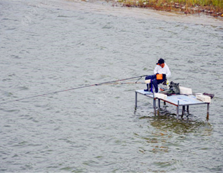 風雨天歇息,晴天釣鰱鳙,技術一點兒沒生